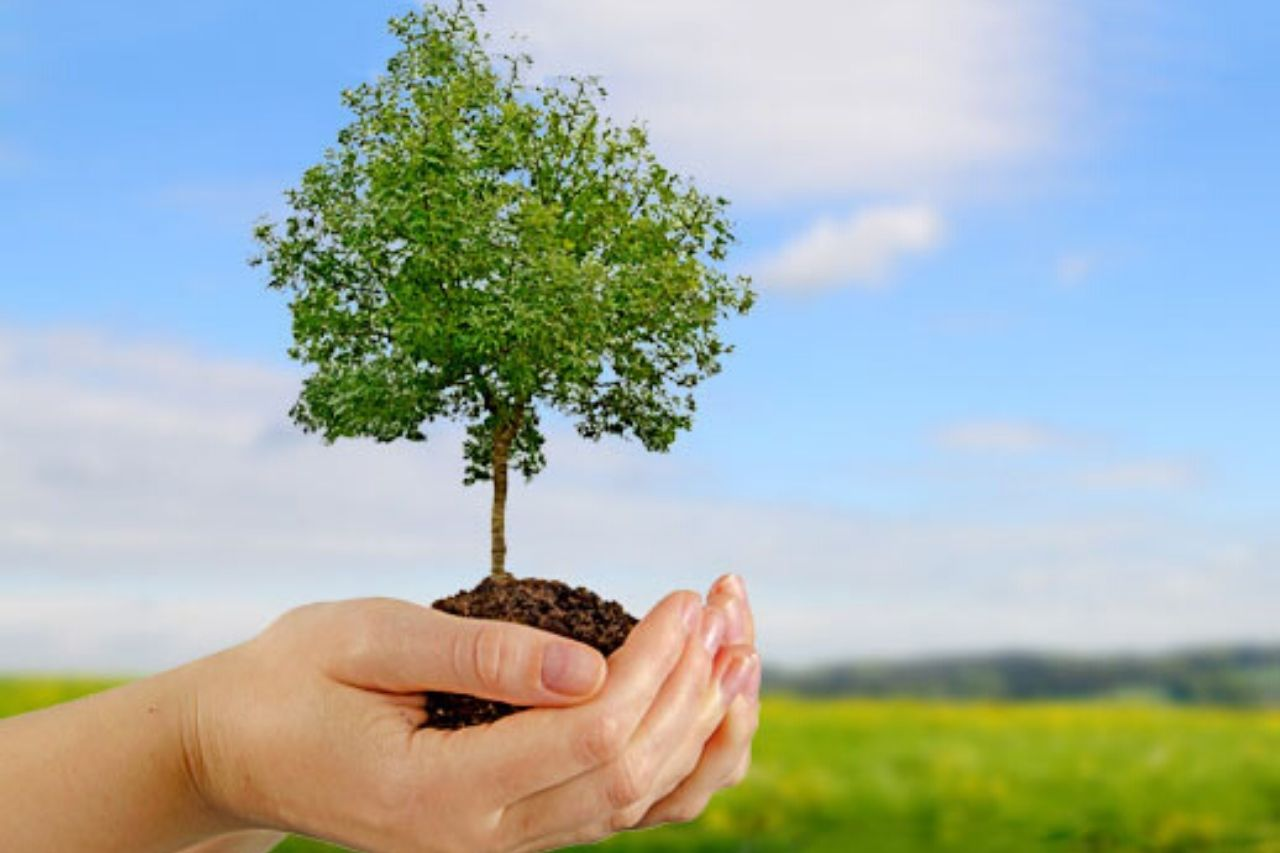 Environmental Services.